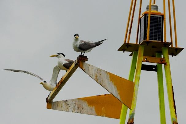 bouy dan burung camar