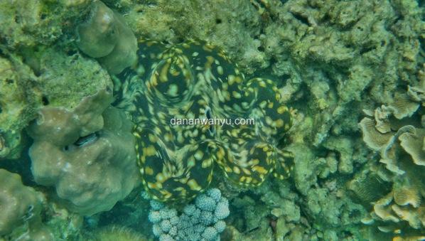 biota laut Tanjung Putus