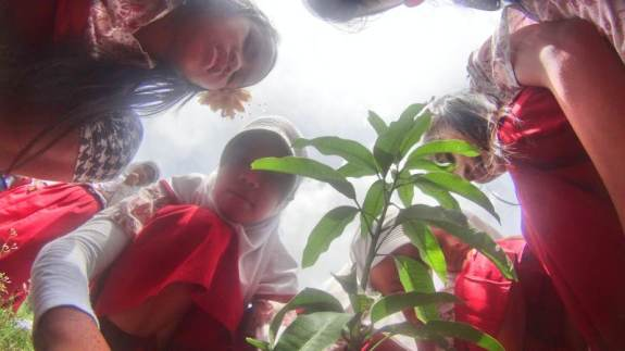menanam pohon di halaman sekolah