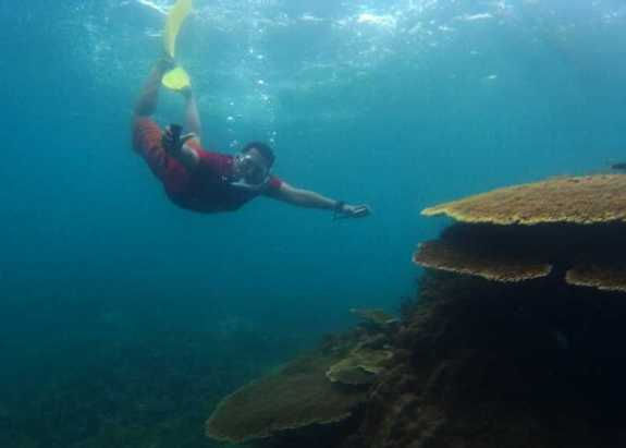 snorkeling gaya ikan pesut