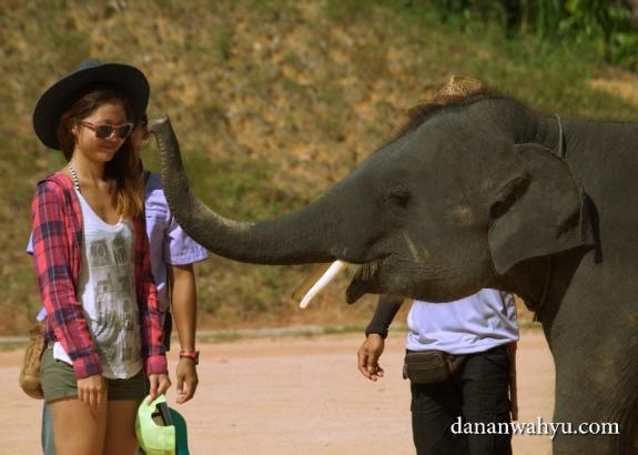 mau dicium gajah?