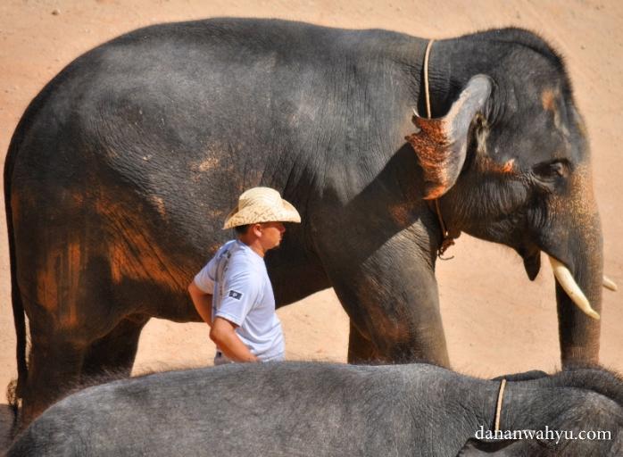 pawang Kampung Gajah Kenyir