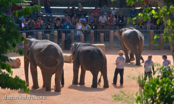 atraksi gajah selalu dinanti penonton