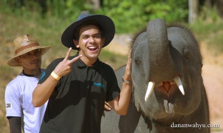 aksi narsis bareng gajah