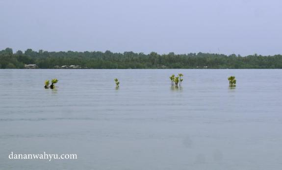 Teluk Sebung tempat memulai Bintan Mangrove Tour
