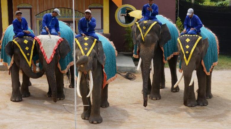 Atraksi gajah di Jumbo Elephant Park