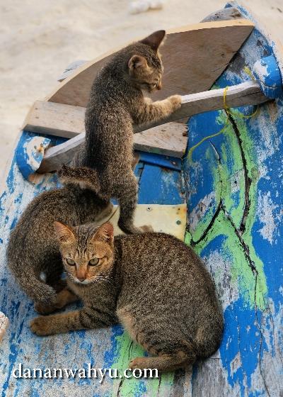 keluarga kucing penunggu pulau Durai