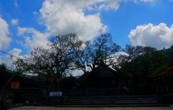 pohon kamboja di depan desa Tenganan