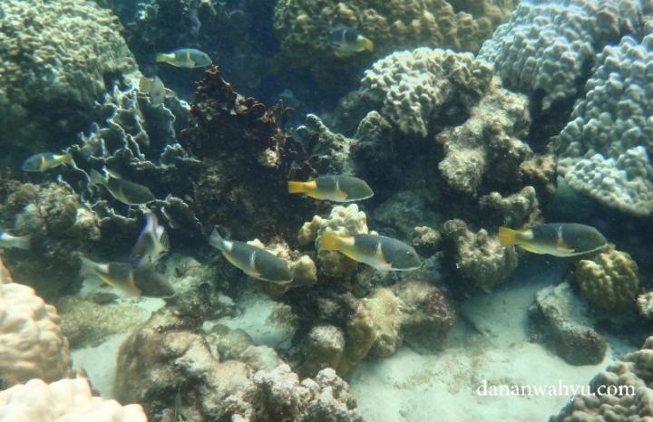 Ikan berenang di antara terumbu karang