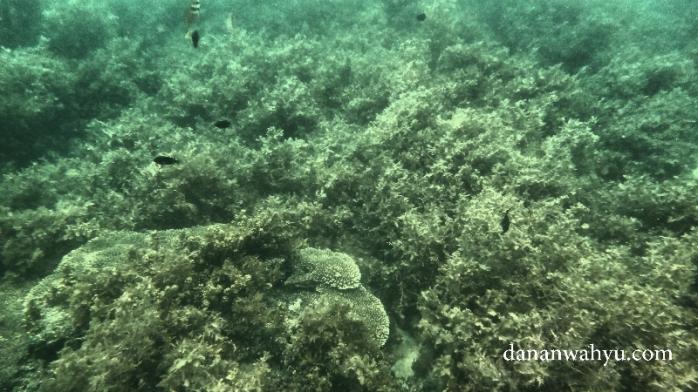 Gulma laut tempat ikan bermain dan mencari makan