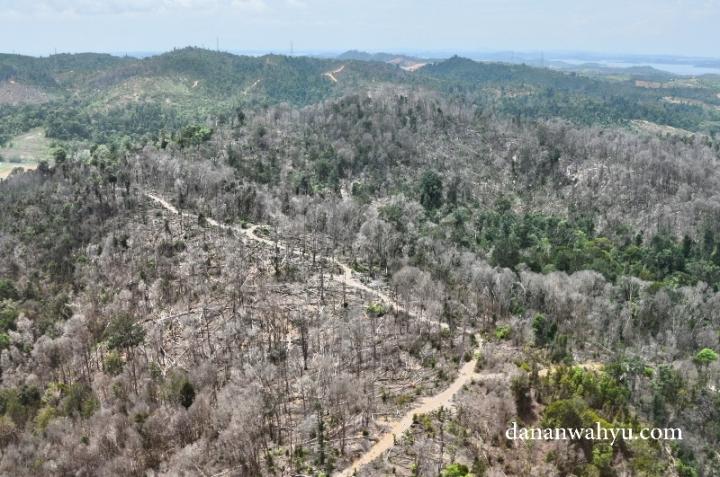Hutan dan bukit hijau yang sekilas terlihat rimbun itu bukan tanpa cela. Coba kamu melihat dari atas , jejak manusia nakal pemalak kayu ilegal itu ada.