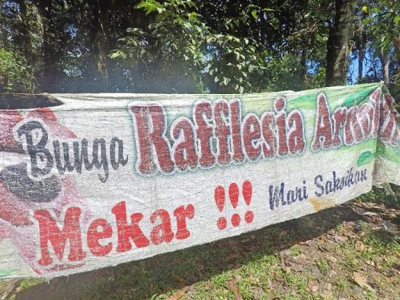 Kalau jalan-jalan ke Bengkulu melihat spanduk seperti ini artinya mendapat rezeki meliht bunga Raflesia Arnoldi