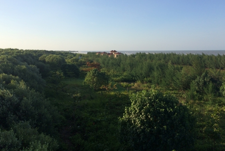 Melihat arboretum dari menara pantau