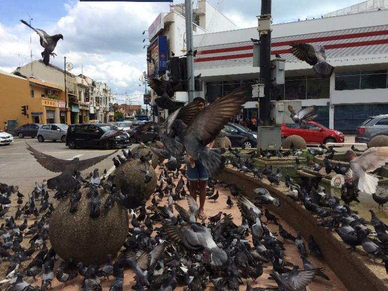 Little India di Melaka tempat asik bermain bersama burung merpati