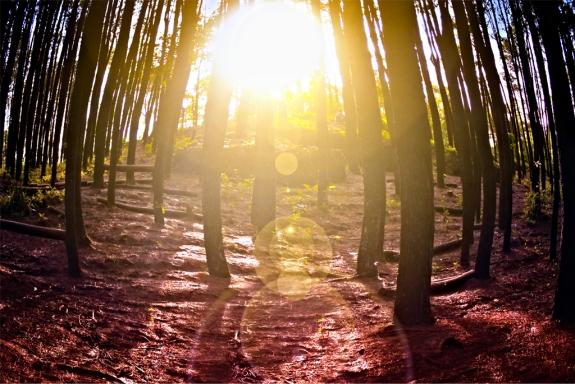 Mentari pagi di hutan pinus