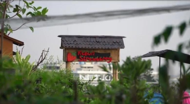 Video ini tayang di NET CJ http://netcj.co.id/unique/video/226114/lengkap-ada-fasilitas-mini-zoo-dan-kebun-stroberi